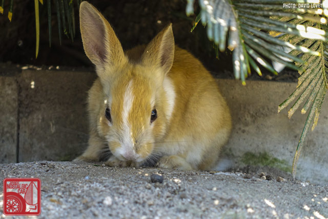 2944_Rabbit Island Japan