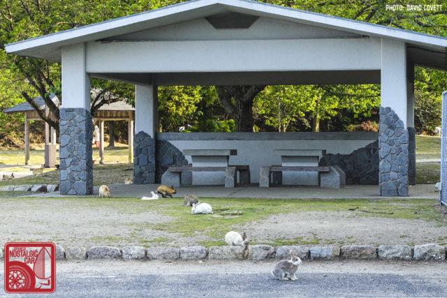 3156_ Okunoshima Rabbit Island
