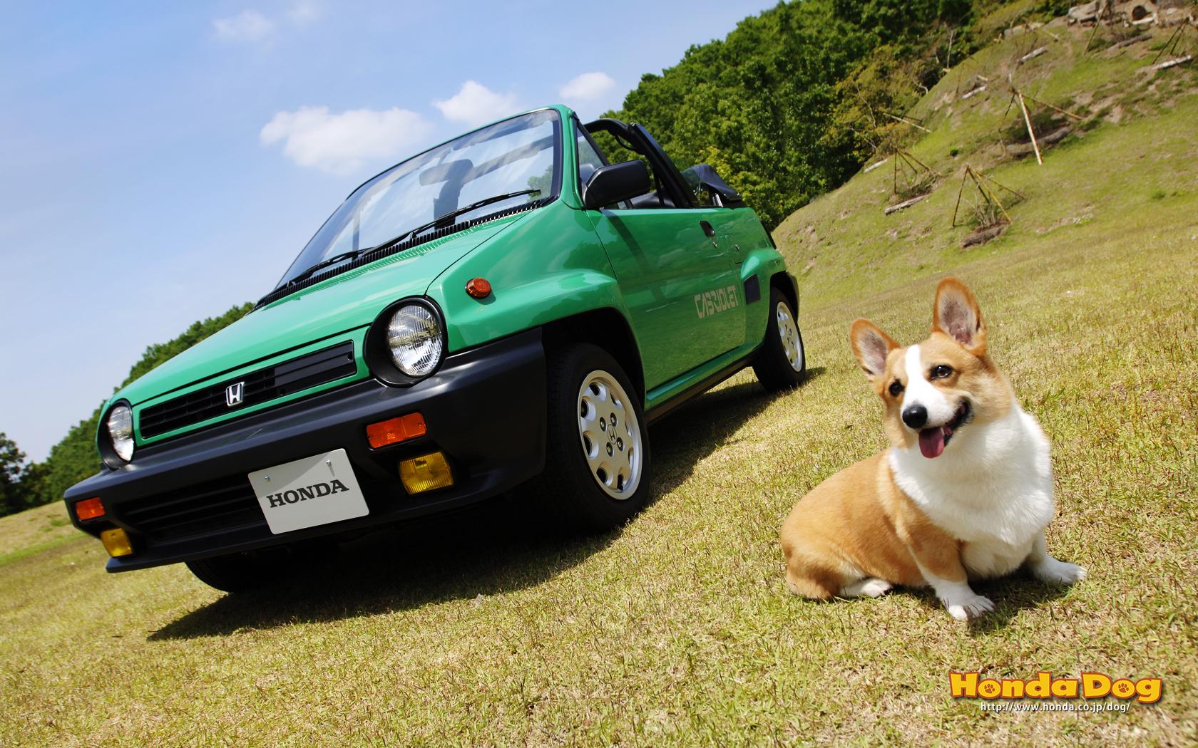 dog-vintage-city-cabriolet-wp1