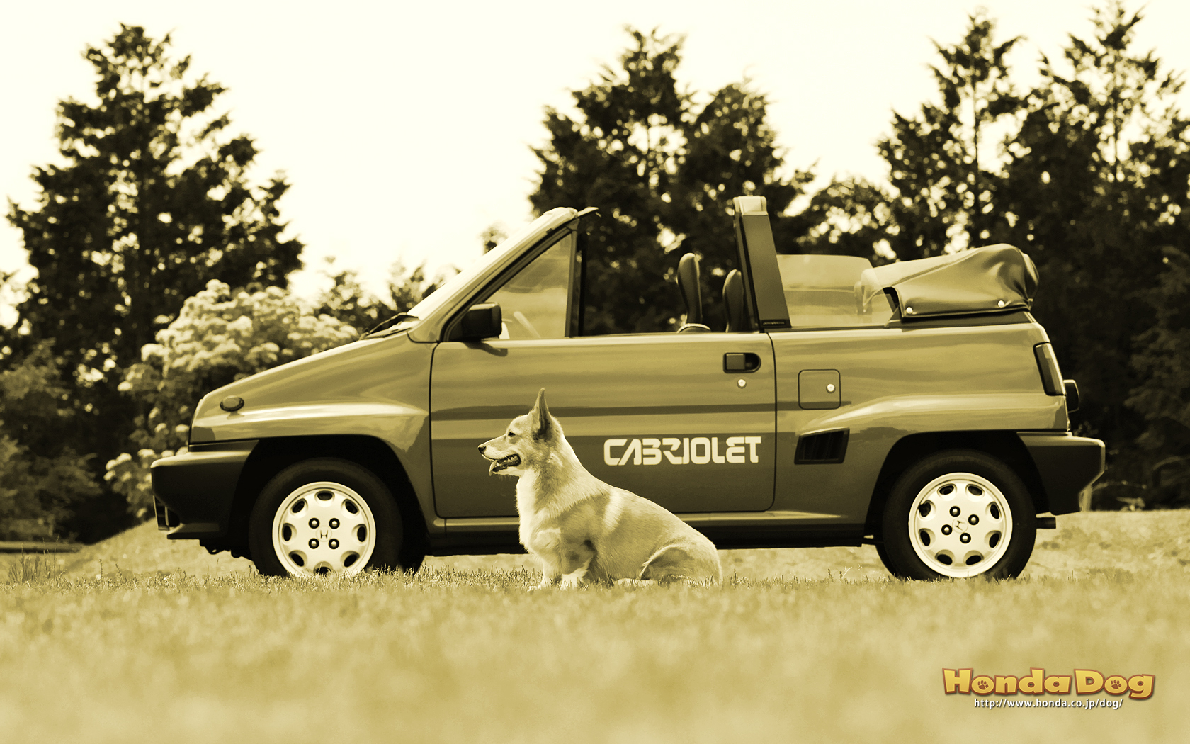 dog-vintage-city-cabriolet-wp3