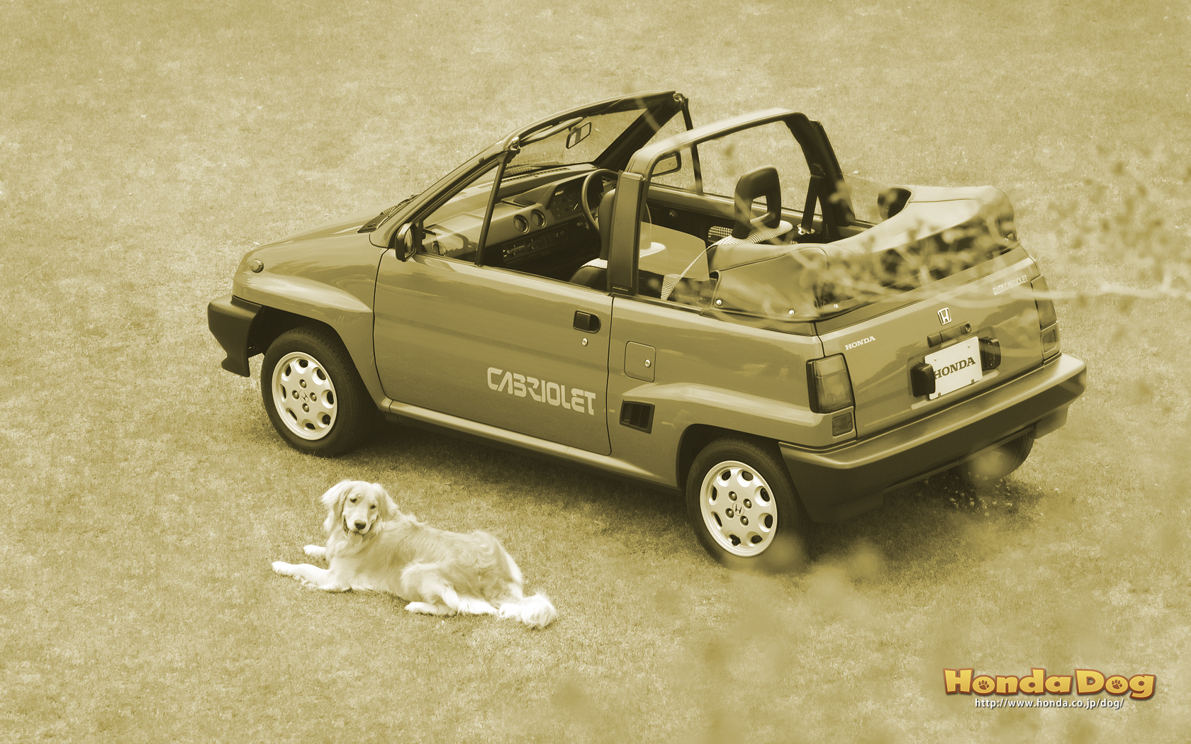 dog-vintage-city-cabriolet-wp4