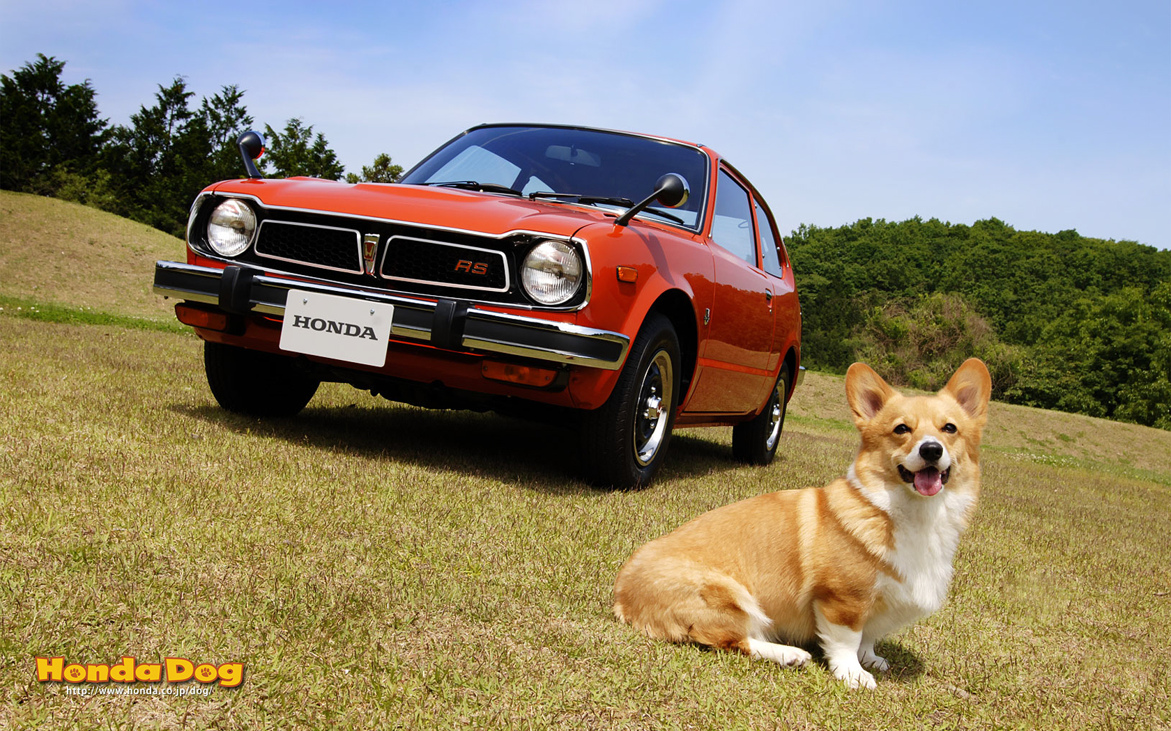 dog-vintage-civic-rs-wp1