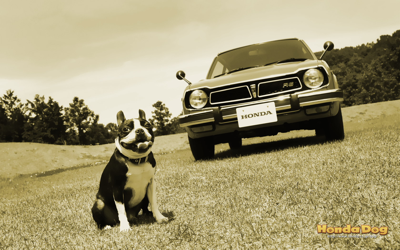 dog-vintage-civic-rs-wp3
