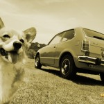 dog-vintage-civic-rs-wp4