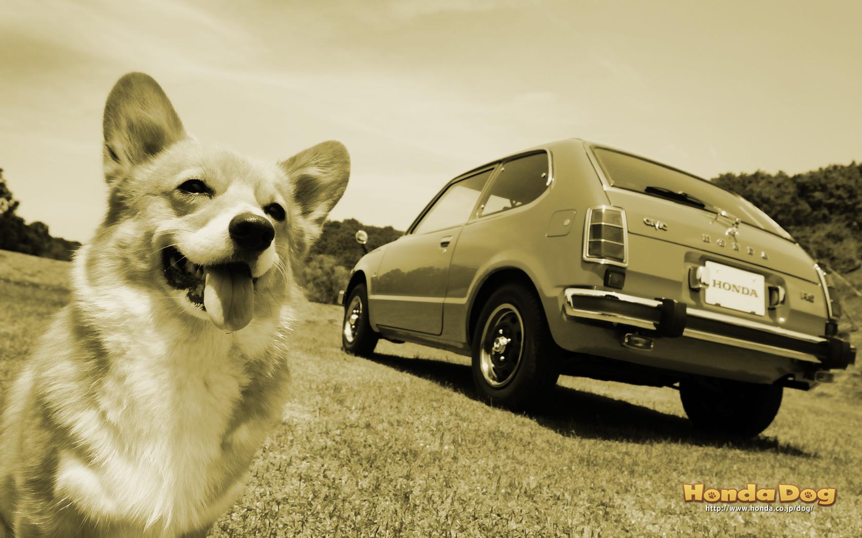 dog-vintage-civic-rs-wp4