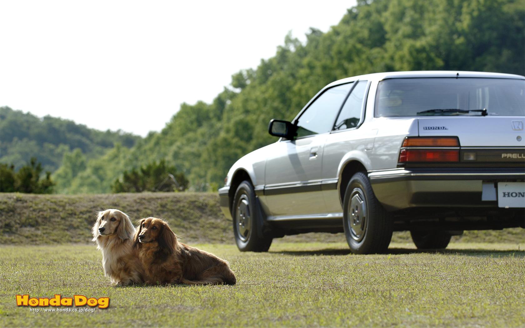 dog-vintage-prelude-wp2