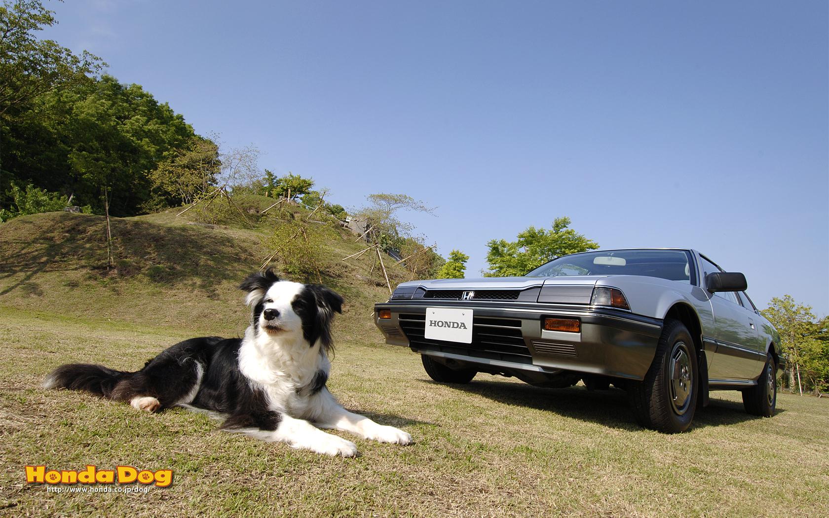 dog-vintage-prelude-wp3