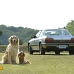 dog-vintage-prelude-wp4