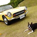 dog-vintage-s800m-wp1