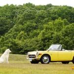 dog-vintage-s800m-wp2
