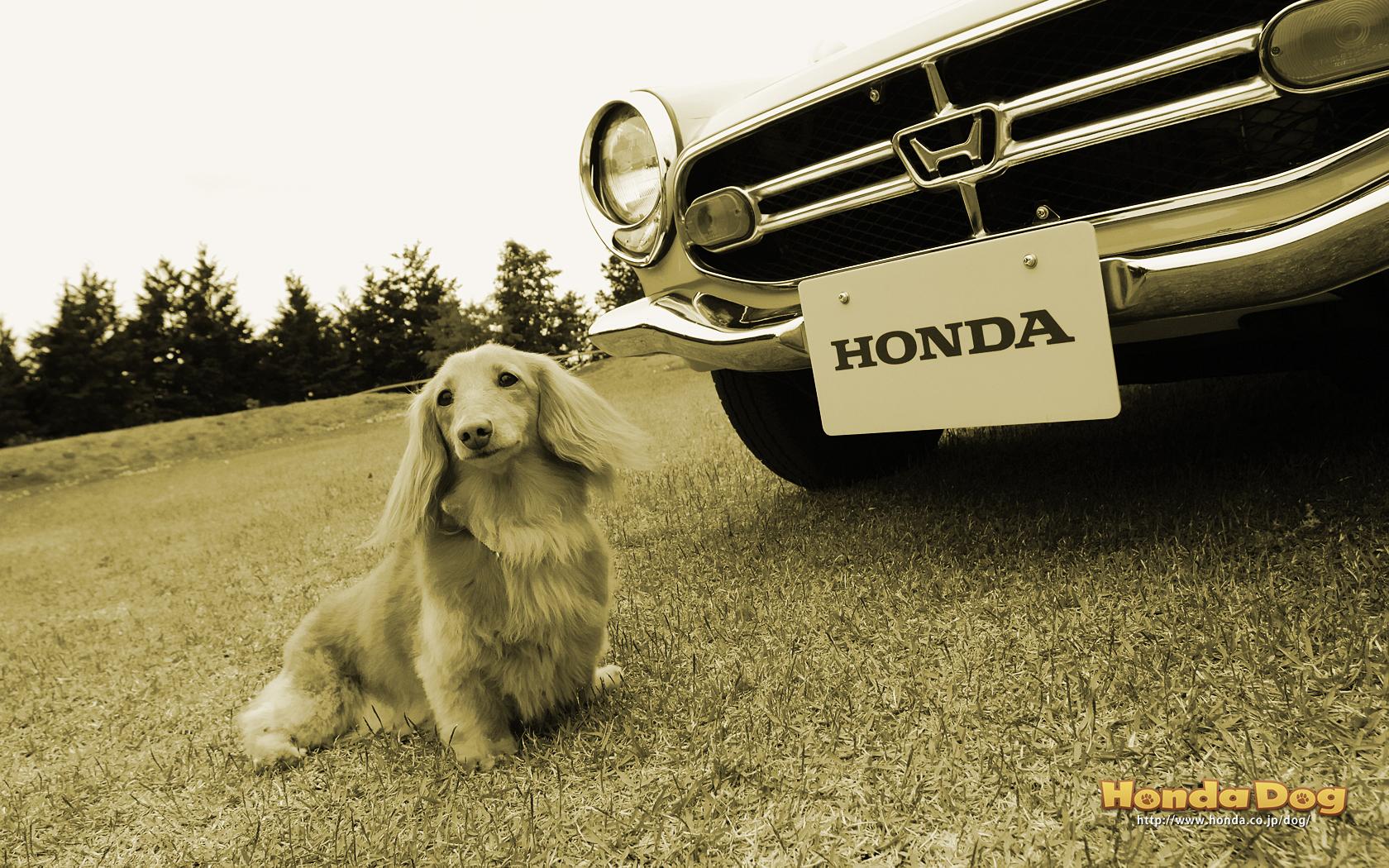 dog-vintage-s800m-wp3