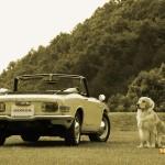 dog-vintage-s800m-wp4