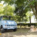 dog-vintage-t360-wp1