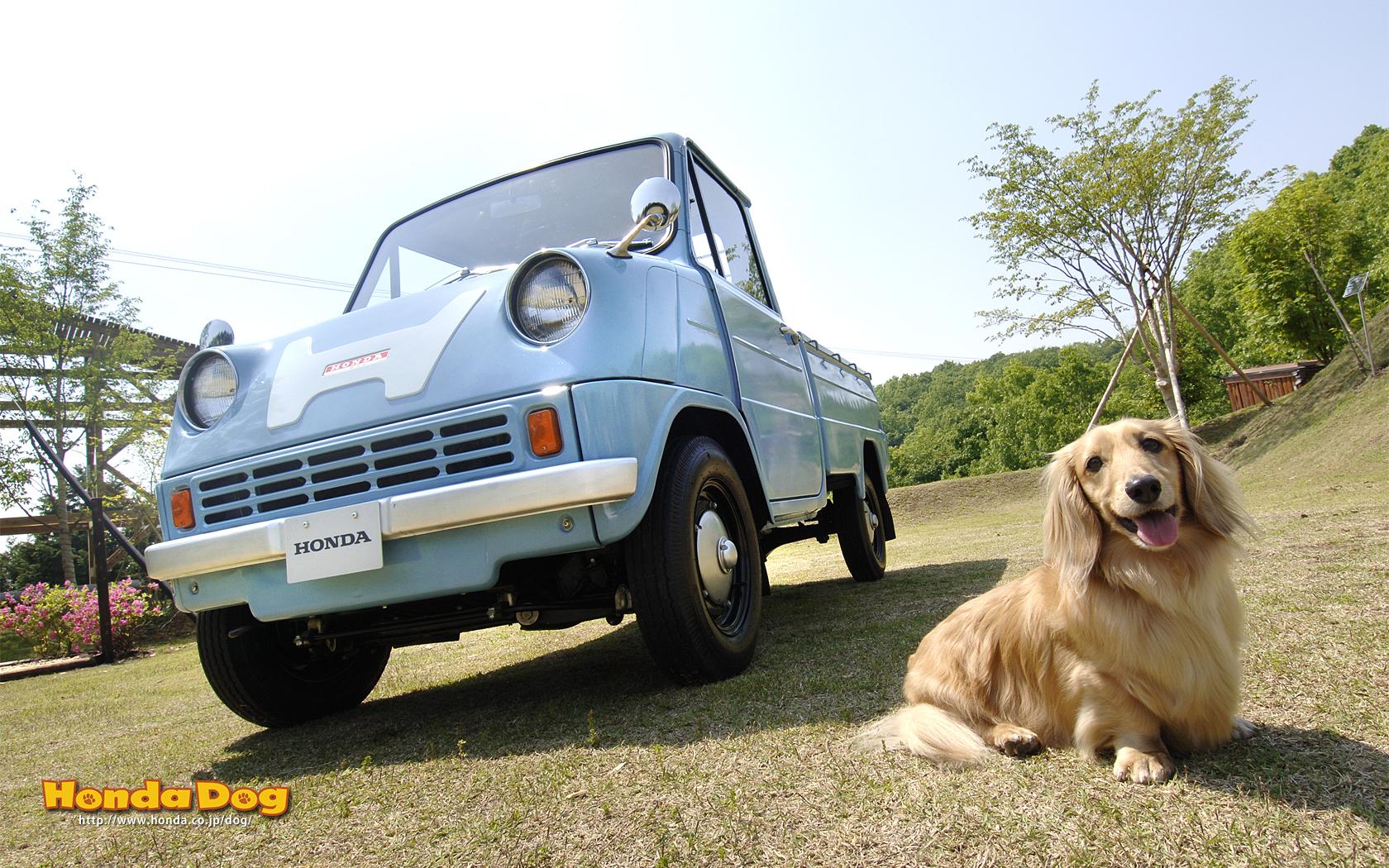 dog-vintage-t360-wp3