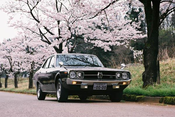 sakura-kenmeri