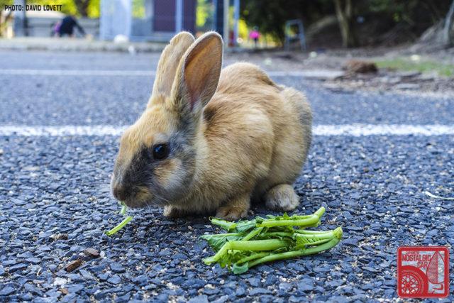 3148_Ookunoshima Rabbit Island