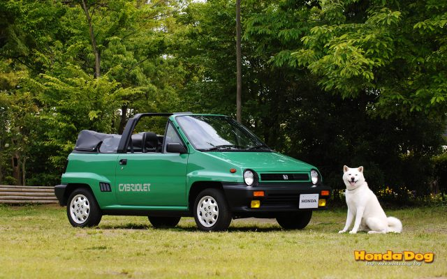 dog vintage city cabriolet wp2